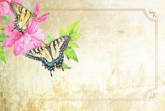 Fondo de la mariposa de Swallowtail Fotografía de archivo