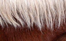 Fondo de la melena del caballo Imagen de archivo libre de regalías