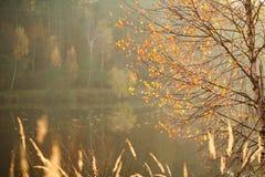 Fondo de la naturaleza, árboles hermosos del otoño en el lago del bosque Fotografía de archivo