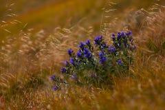 Fondo de la naturaleza, alta resolución, panorámica, sol, hierba en Imagenes de archivo