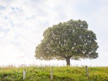 Fondo de la naturaleza con el árbol y la hierba Fotos de archivo libres de regalías