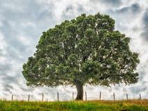Fondo de la naturaleza con el árbol y la hierba Fotografía de archivo libre de regalías