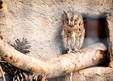 Fondo de la naturaleza con el búho Imagen de archivo libre de regalías