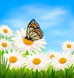 Fondo de la naturaleza con la flor de la margarita de la primavera y pero Foto de archivo