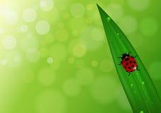 Fondo de la naturaleza con la hoja y la mariquita Foto de archivo libre de regalías