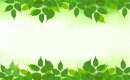 Fondo de la naturaleza con las hojas frescas verdes Foto de archivo libre de regalías