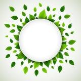 Fondo de la naturaleza con las hojas verdes frescas Foto de archivo