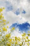 Fondo de la naturaleza con las nubes y el cielo Imagen de archivo