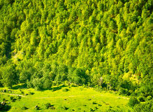 Fondo de la naturaleza con paisaje verde del bosque Fotos de archivo libres de regalías