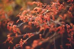 Fondo de la naturaleza de la primavera con las hojas coloridas en rama vendimia Imagenes de archivo