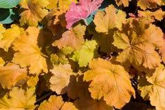 Fondo de la naturaleza de la textura de la hoja del otoño Imagen de archivo libre de regalías
