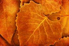 Fondo de la naturaleza de los detalles de las hojas de otoño Fotos de archivo