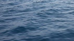 Fondo de la naturaleza del agua del Mar Rojo almacen de video