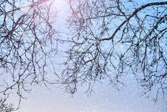 Fondo de la naturaleza del invierno con las siluetas de árboles y de la nieve Fotografía de archivo libre de regalías