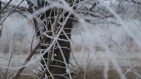 Fondo de la naturaleza del invierno, tierra del kazakh almacen de video