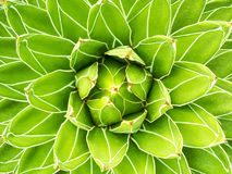Fondo de la naturaleza del modelo de la planta verde Foto de archivo