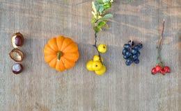 Fondo de la naturaleza del otoño con las frutas y las castañas Imagen de archivo