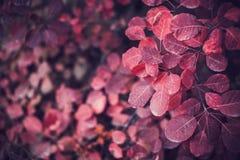 Fondo de la naturaleza del otoño con las hojas coloridas en rama Foco suave Imágenes de archivo libres de regalías