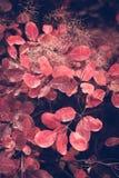 Fondo de la naturaleza del otoño con las hojas coloridas en rama Foco suave Imagen de archivo libre de regalías