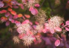 Fondo de la naturaleza del otoño con las hojas coloridas en rama Foco suave Imagen de archivo