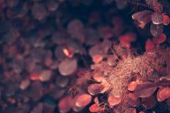 Fondo de la naturaleza del otoño con las hojas coloridas en rama Foco suave Imagenes de archivo
