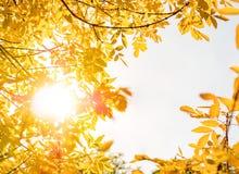 Fondo de la naturaleza del otoño con las hojas de oro en día soleado Fotografía de archivo libre de regalías