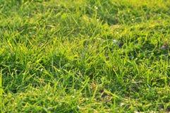 Fondo de la naturaleza del resorte con la hierba fotografía de archivo