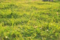 Fondo de la naturaleza del resorte con la hierba imagen de archivo