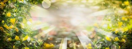 Fondo de la naturaleza del verano con las flores amarillas y follaje en el jardín o el parque, bandera Imágenes de archivo libres de regalías