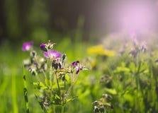 Fondo de la naturaleza del verano de las flores en un día soleado fotos de archivo libres de regalías