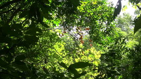 Fondo de la naturaleza El brillo hermoso de Sun con soplar en verde del árbol del viento se va metrajes
