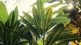 Fondo de la naturaleza El brillo hermoso de Sun con soplar en verde del árbol del viento se va almacen de video