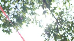Fondo de la naturaleza El brillo hermoso de Sun con soplar en verde del árbol del viento se va Bokeh abstracto borroso con el sol almacen de video
