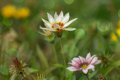 Fondo de la naturaleza, flores Fotografía de archivo