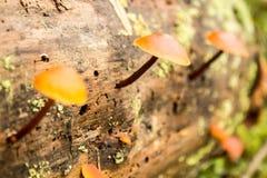 Fondo de la naturaleza Moss Close Up View con la pequeña seta de las setas crecida Detalles macros Foco selectivo Foto de archivo
