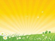 Fondo de la naturaleza - verano stock de ilustración
