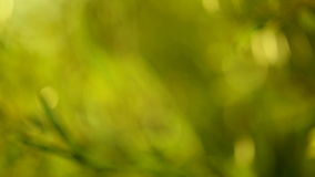 Fondo de la naturaleza verde almacen de video