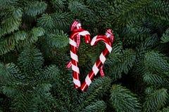 Fondo de la Navidad con el árbol imperecedero Fotografía de archivo