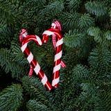Fondo de la Navidad con el árbol imperecedero Imágenes de archivo libres de regalías