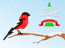 Fondo de la Navidad con el pájaro del piñonero Foto de archivo