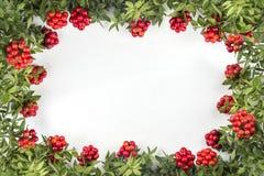 Fondo de la Navidad con la flor roja de Kokina Foto de archivo