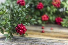 Fondo de la Navidad con la flor roja de Kokina Fotos de archivo