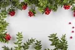 Fondo de la Navidad con la flor roja de Kokina Foto de archivo libre de regalías