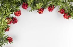 Fondo de la Navidad con la flor roja de Kokina Imagen de archivo