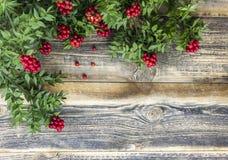 Fondo de la Navidad con la flor roja de Kokina Fotos de archivo libres de regalías