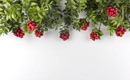 Fondo de la Navidad con la flor roja de Kokina Imagenes de archivo