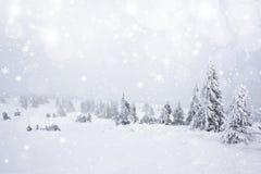 Fondo de la Navidad con las estrellas y los abetos nevosos Foto de archivo libre de regalías