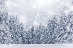 Fondo de la Navidad con las estrellas y los abetos nevosos Imagen de archivo