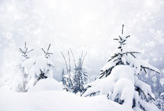 Fondo de la Navidad con las estrellas y los abetos nevosos Imágenes de archivo libres de regalías