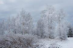 Fondo de la Navidad con los árboles nevosos Imagenes de archivo